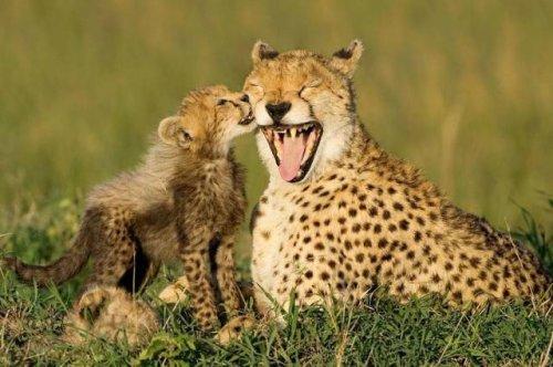 Очаровательные дикие животные (21 фото)