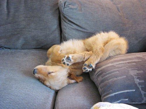 Спящие щенки (26 фото)