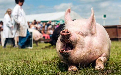 Мир животных в фотографиях (18 фото)