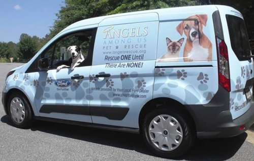 Объятия, спасшие жизнь двум собакам (3 фото)