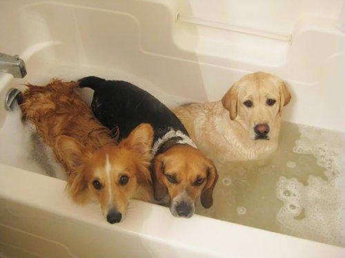Животные, которые любят купаться (28 фото)