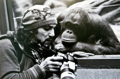 Животные, которые хотят быть фотографами (31 фото)