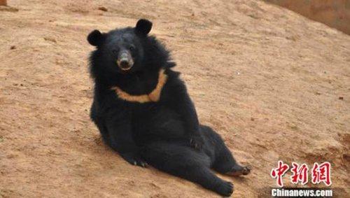 Китаец два года держал дома медведей, приняв их за собак (2 фото)