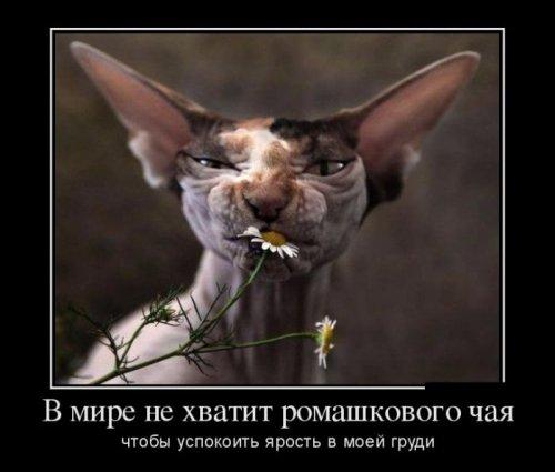 Демотиваторы для хорошего настроения! (30 фото)