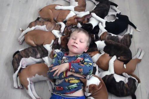 Забавное видео: Как бы тебе жилось с 16 щенками
