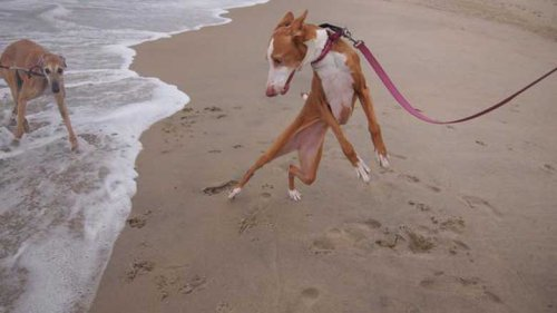 Собаки,которые боятся воды (14 фото)