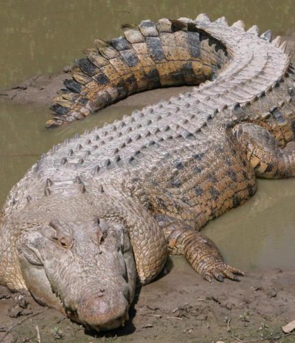 Животные, с которыми рискнул бы встретиться далеко не каждый человек (47 фото)