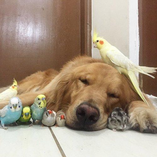 Позитив дня: Лучшие друзья (23 фото)