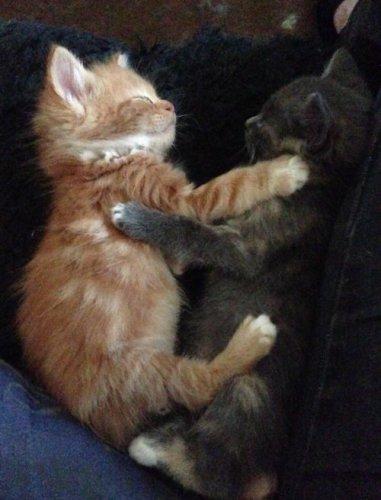 Спят усталые котята (35 фото)