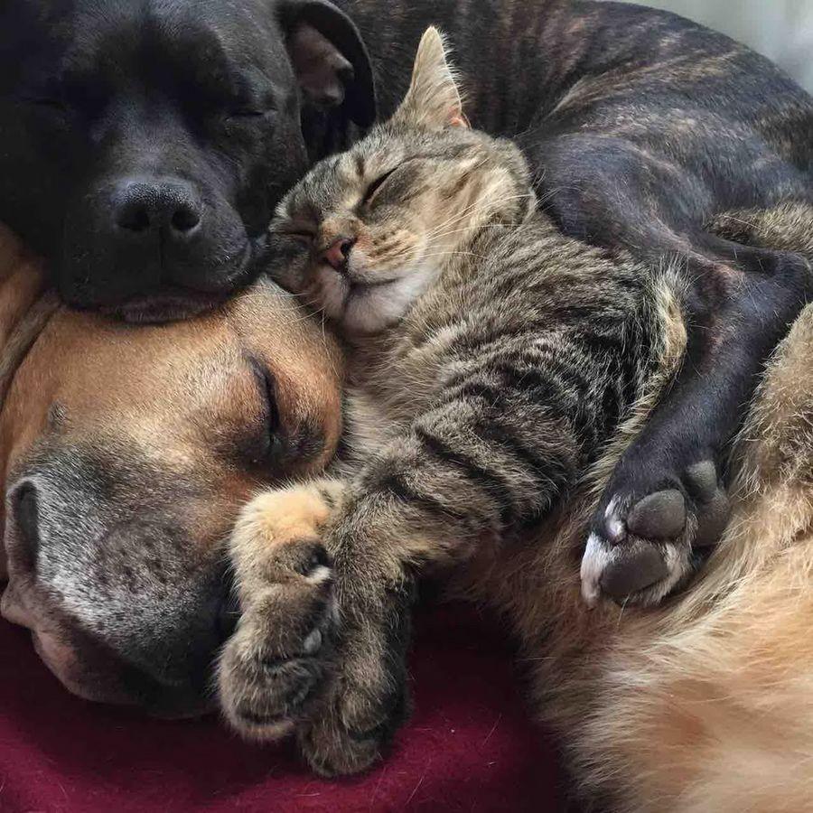 Картинки собака и кошка любовь