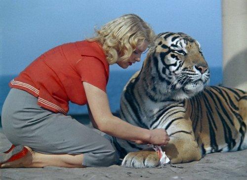 Знаменитые животные-актёры (15 фото)