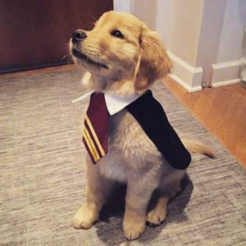 Собаки, которым нравятся фильмы о Гарри Поттере (11 фото)