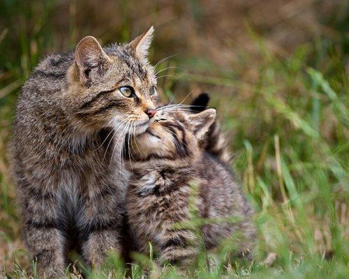 Очаровательные кошки и их мини-копии (29 фото)