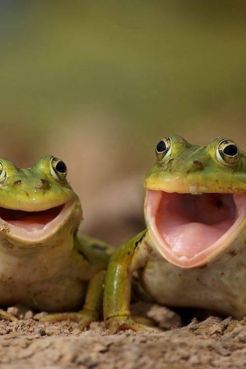 Смешные, картинки жаб смешные