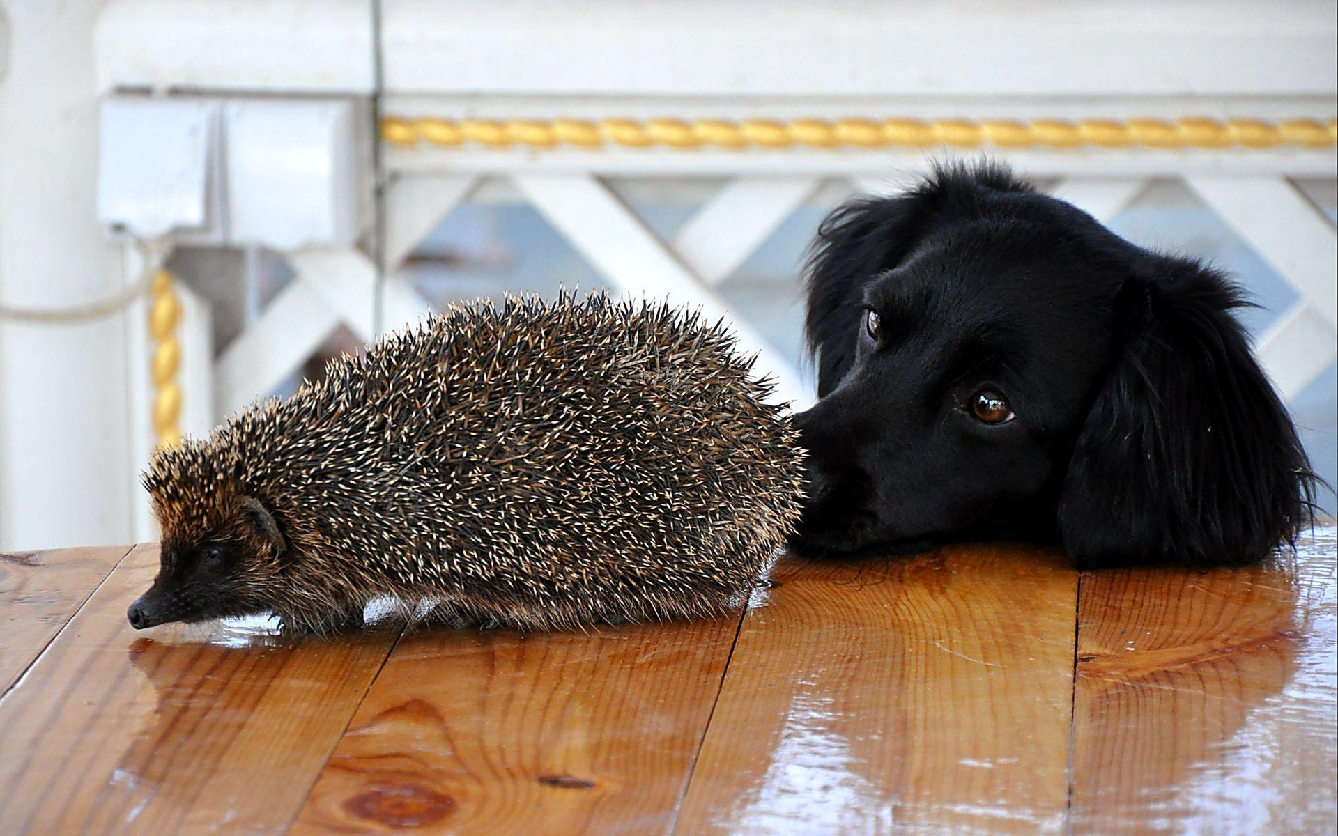 Обои на рабочий стол: собаки (15 фото)
