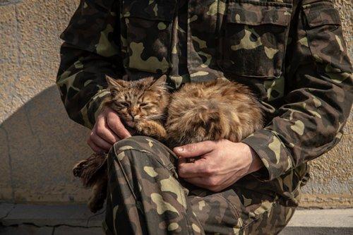 Военные рядом с кошками (26 фото)