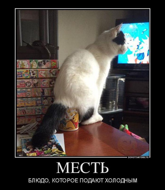 Фото кота для демотиватора