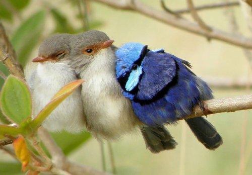 Согревающие душу фотографии птичек (24 фото)