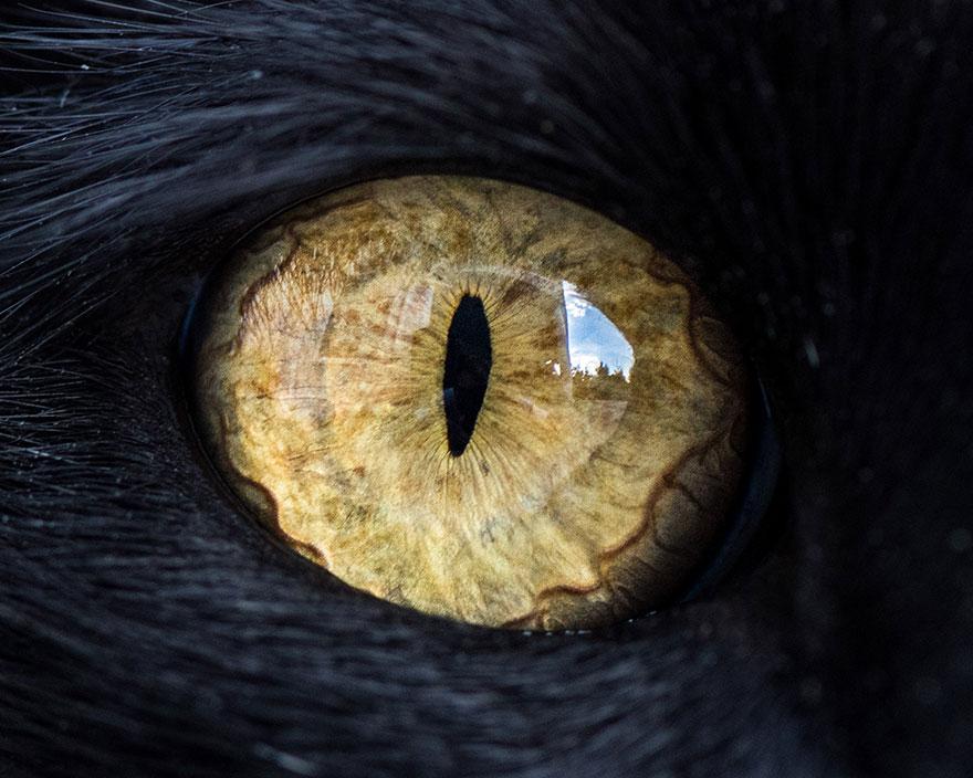 можете фото глаз животных статье прочтете