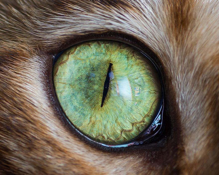 бисквиты отдельно, фото глаз животных распила древесины