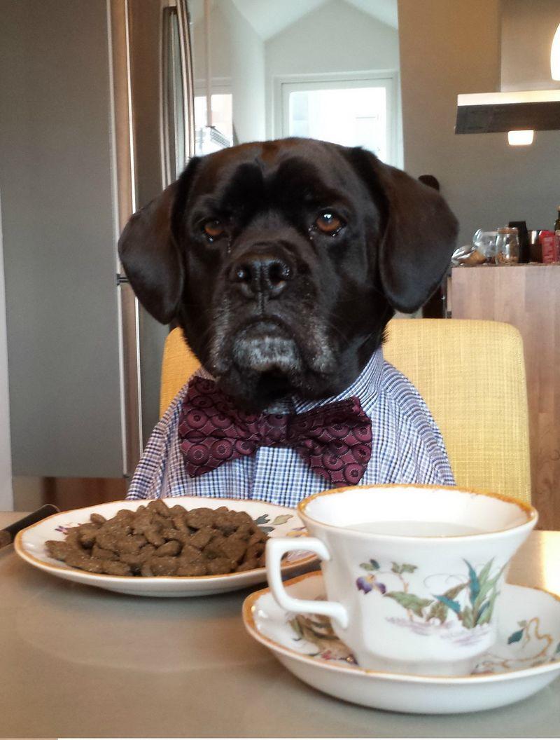 картинки с собакой доброго утра молился