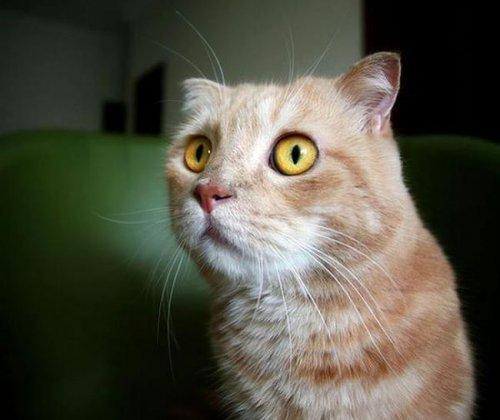 Отпечаток лапы кошки, жившей 2000 лет назад (2 фото)