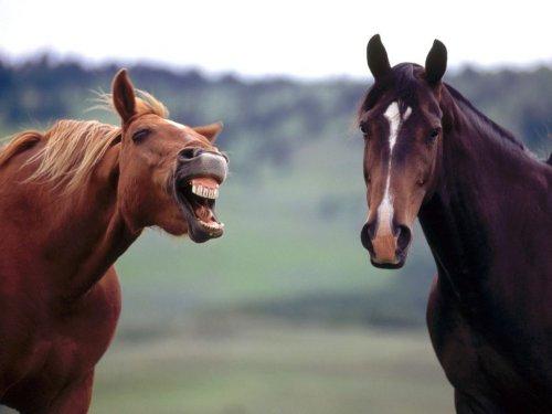 Лошади выражают некоторые эмоции как люди