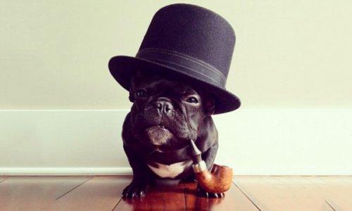 Мужчина хотел привезти в отель собаку и получил достойный ответ от администрации