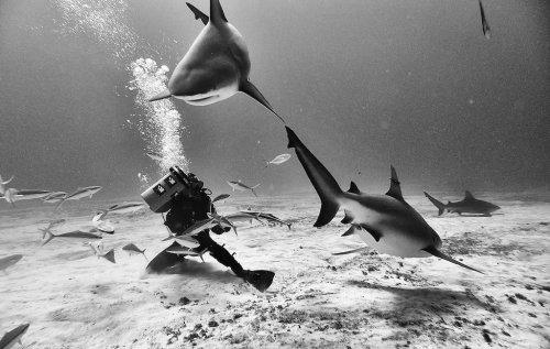 Подводный мир Ануара Патьяне (10 фото)