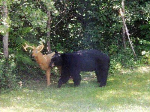 Игра по- медвежьи (6 фото)