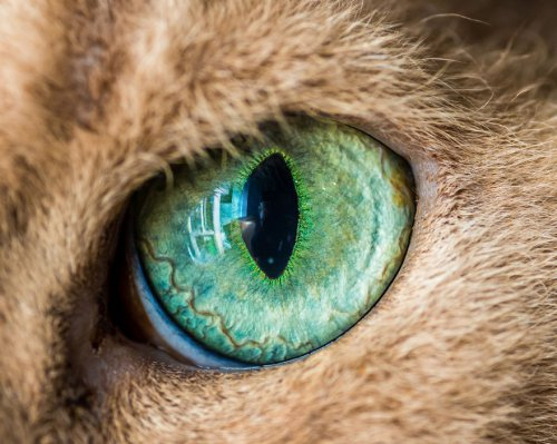 Макрофотографии кошачьих глаз (15 фото)