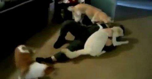 Юмор : Три собаки и солдат. Встреча на высшем уровне!