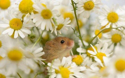 Крохотные мышата (24 фото)