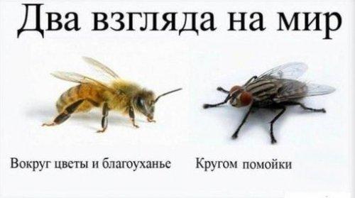 Притча: Сознание Пчелы
