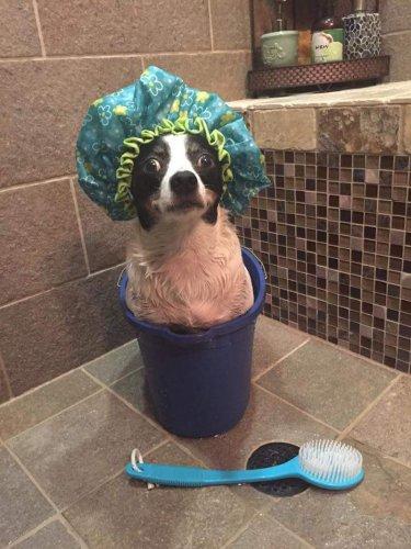 Смешные и забавные собаки (40 фото)