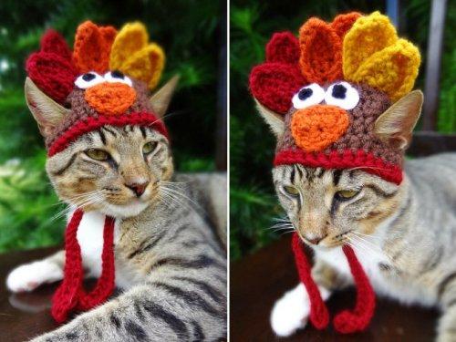 Домашние животные в вязаных шапках (17 фото)