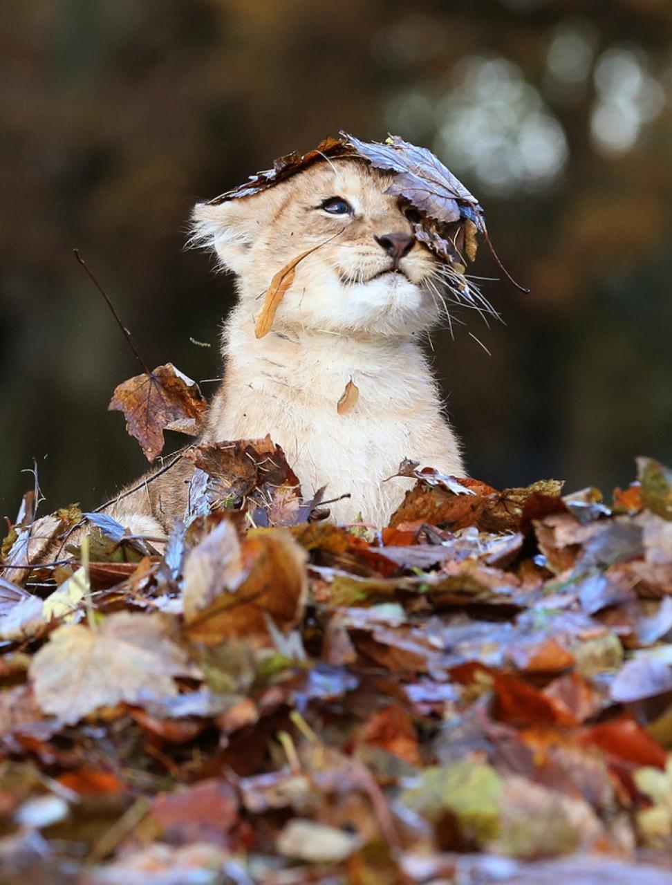 осень смешные животные