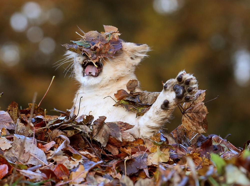 первый прикольные картинки осени и животных кипр райский
