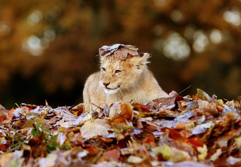 неприхотлив животные и осень в картинках для рассказала нам