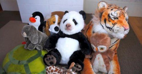 Панда смешно ест вафельный рожок:)