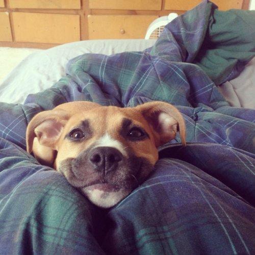 Пост собачьей радости и счастья! (35 фото)