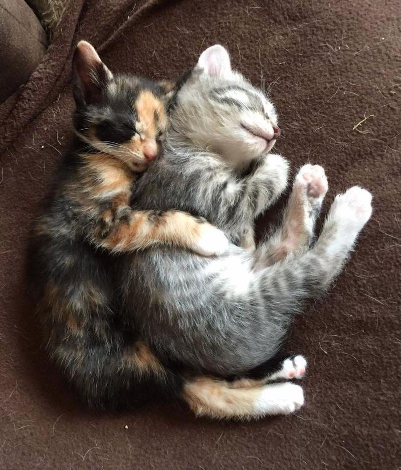 Котята спят в обнимку фото