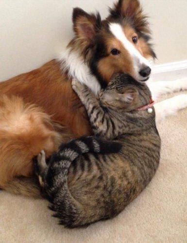 Крепкая дружба (27 фото)