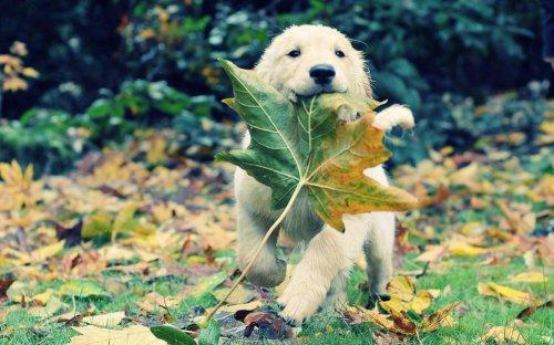 Радуемся осени! (43 фото)