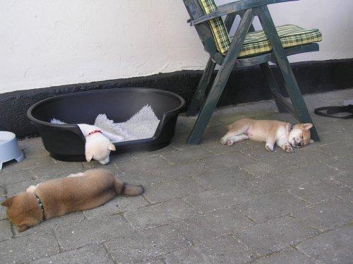 Смешные и забавные собаки (38 фото)