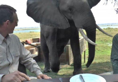 Слон атаковал завтракающих туристов