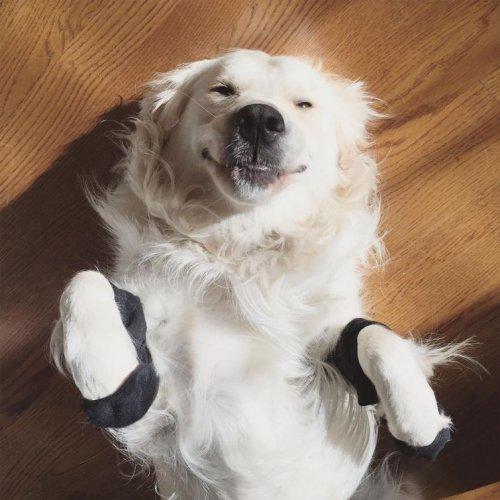 Собаки в носочках (20 фото)