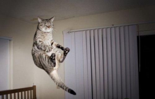 Юмор : Фотографии котов, сделанные в самый нужный момент (11 фото)