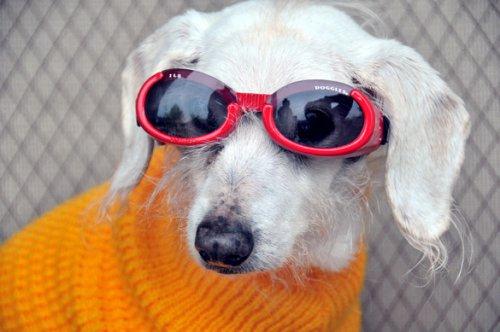 Учёные рассказали, как собаки относятся к своим хозяевам