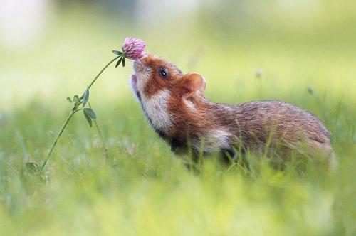 Очаровательные хомячки (15 фото)